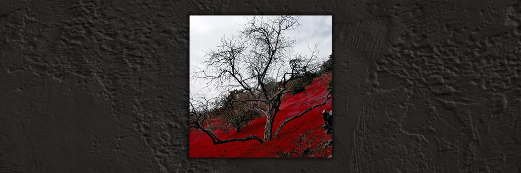 13 Track LP - Leviathan Romance